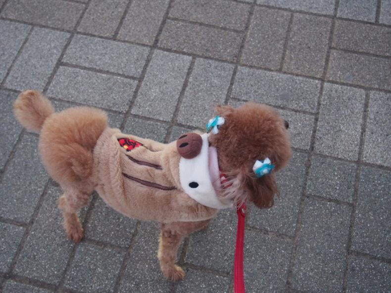 静岡SA上り うりぼー服のマオ可愛い