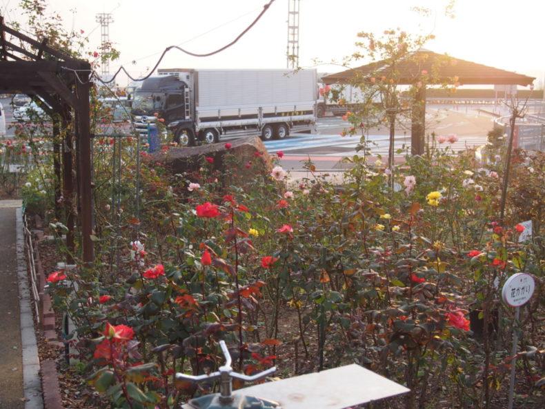 福山SA上り バラ園から見る駐車場
