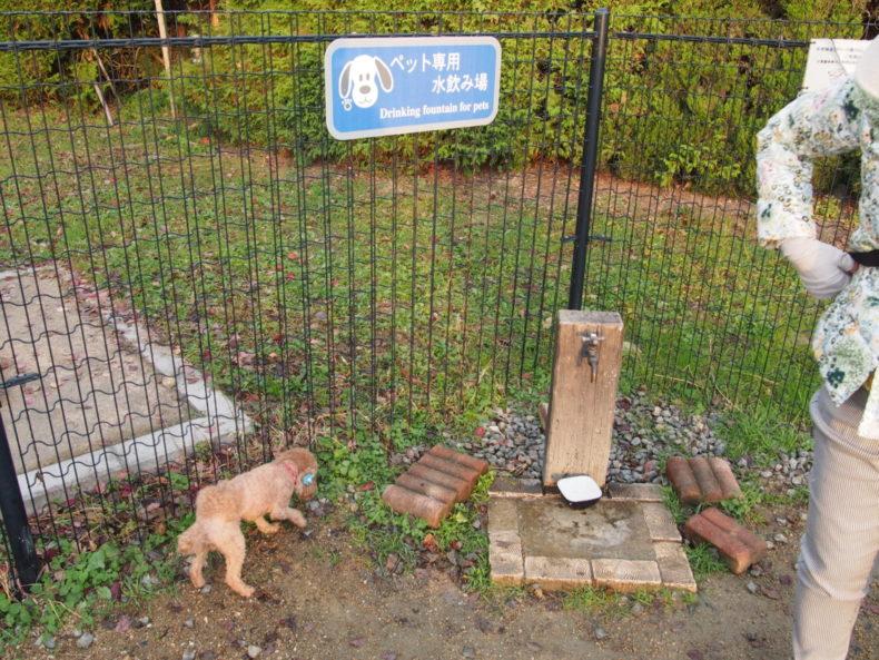 福山SA上り ドッグラン内の水飲み場